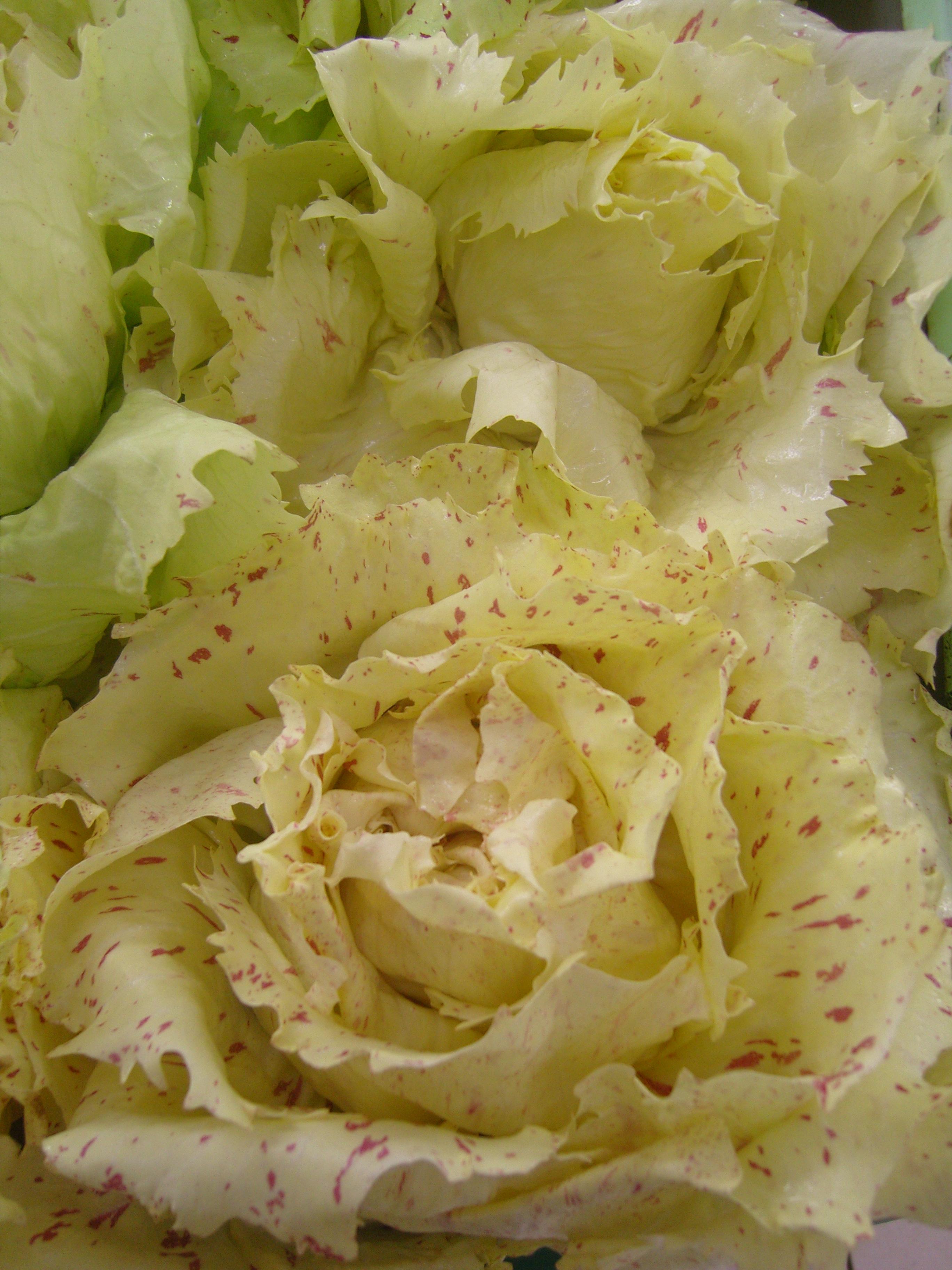 Castelfranco art de vivre - Variete de salade d hiver ...