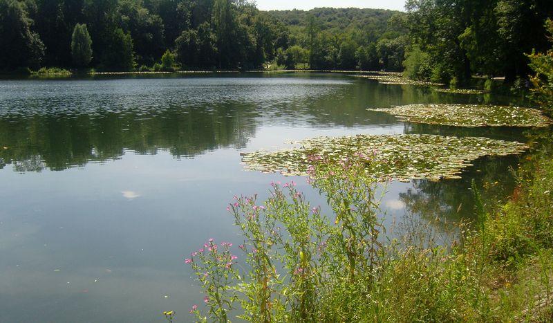 Les étangs de Corot Etang de Corot nenuphars