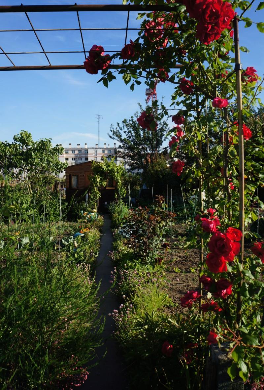 Parcelle de Jardins Familiaux Versailles Jussieu