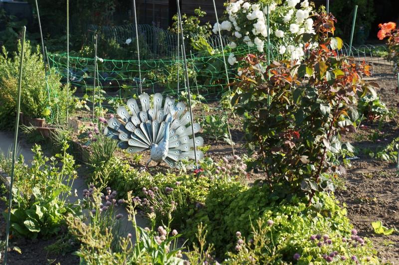 Paon en métal garde le jardin